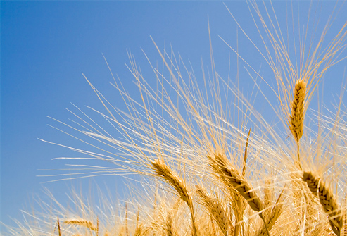 Avoid Wheat #Gluten ...