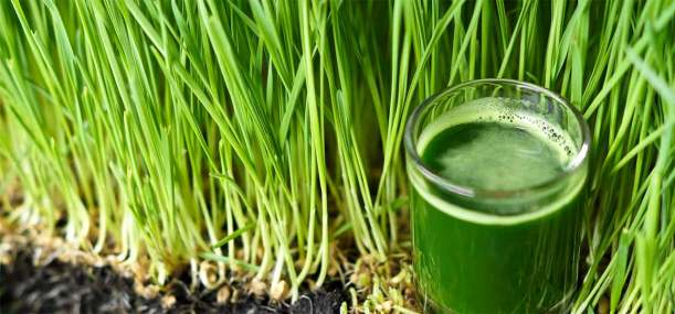 4950_5-Best-Benefits-Of-Wheatgrass-Juice-For-Skin-Hair-And-Health