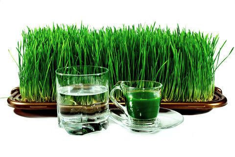Wheat-Grass-Benefits-Remedies