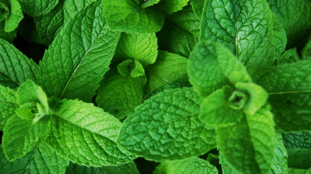 peppermint-herbs